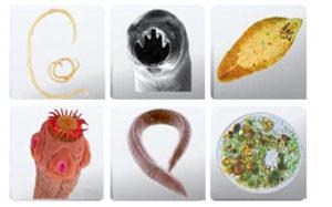 Какие анализы на паразитов надо сдавать взрослому человеку?