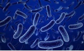 Бактерии рода клостридий