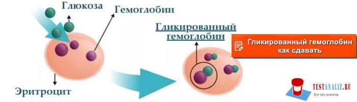 гликированный гемоглобин как сдавать