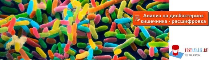 анализ на дисбактериоз кишечника расшифровка