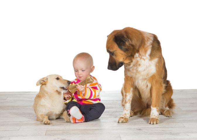 Photo of Иммуноглобулин Е: анализ у детей, назначение, норма, отклонение