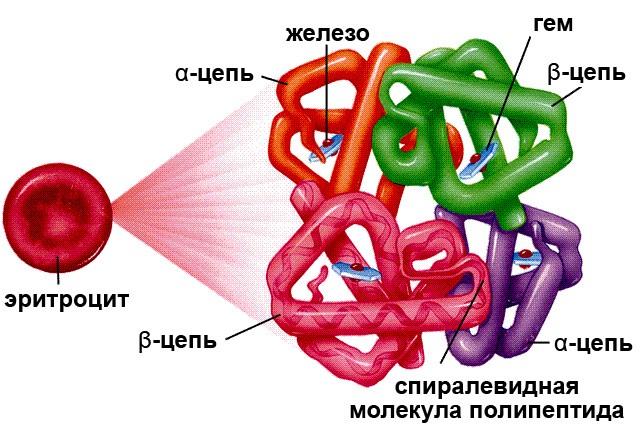 Photo of Гликозированный гемоглобин – что это такое. Как сдавать, расшифровка анализа, норма