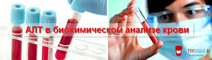 АЛТ в биохимическом анализе крови